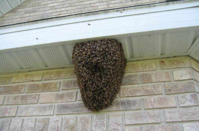 Bee Swarm Home